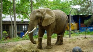 Elefantenreservat Starkenberg